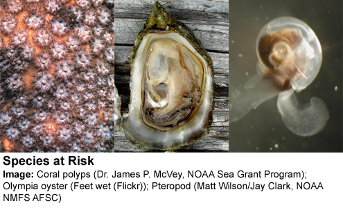 Ocean species threatened by acidification