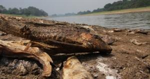 Amazon Drought
