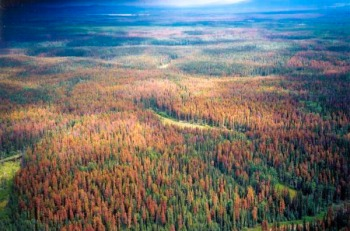 Mountain Pine Beetle Outbreak, British Columbia